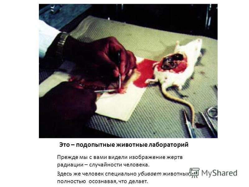 Это – подопытные животные лабораторий Прежде мы с вами видели изображение жертв радиации – случайности человека. Здесь же человек специально убивает животных, полностью осознавая, что делает.