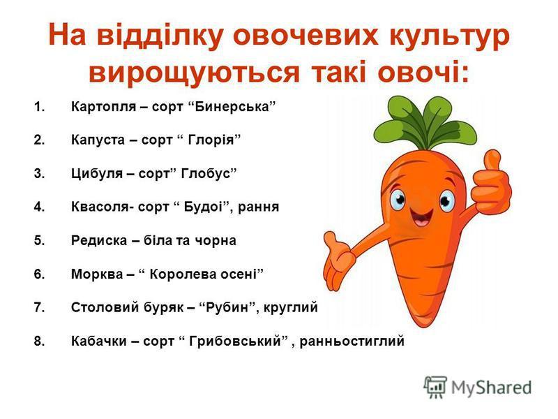 На відділку овочевих культур вирощуються такі овочі: 1.Картопля – сорт Бинерська 2.Капуста – сорт Глорія 3.Цибуля – сорт Глобус 4.Квасоля- сорт Будоі, рання 5.Редиска – біла та чорна 6.Морква – Королева осені 7.Столовий буряк – Рубин, круглий 8.Кабач