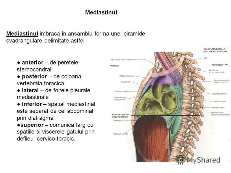 Mediastinul Mediastinul imbraca in ansamblu forma unei piramide cvadrangulare delimitate astfel : anterior – de peretele sternocondral posterior – de coloana vertebrala toracica lateral – de foitele pleurale mediastinale inferior – spatial mediastina