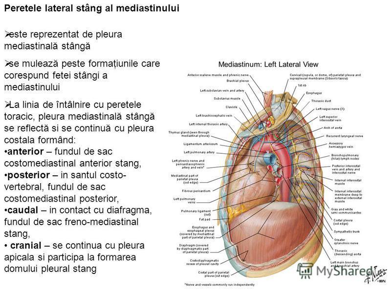 Peretele lateral stâng al mediastinului este reprezentat de pleura mediastinală stângă se mulează peste formaţiunile care corespund fetei stângi a mediastinului La linia de întâlnire cu peretele toracic, pleura mediastinală stângă se reflectă si se c