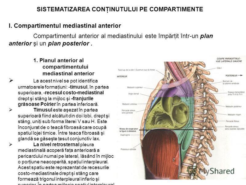 SISTEMATIZAREA CONŢINUTULUI PE COMPARTIMENTE I. Compartimentul mediastinal anterior Compartimentul anterior al mediastinului este împărţit într-un plan anterior şi un plan posterior. 1. Planul anterior al compartimentului mediastinal anterior La aces