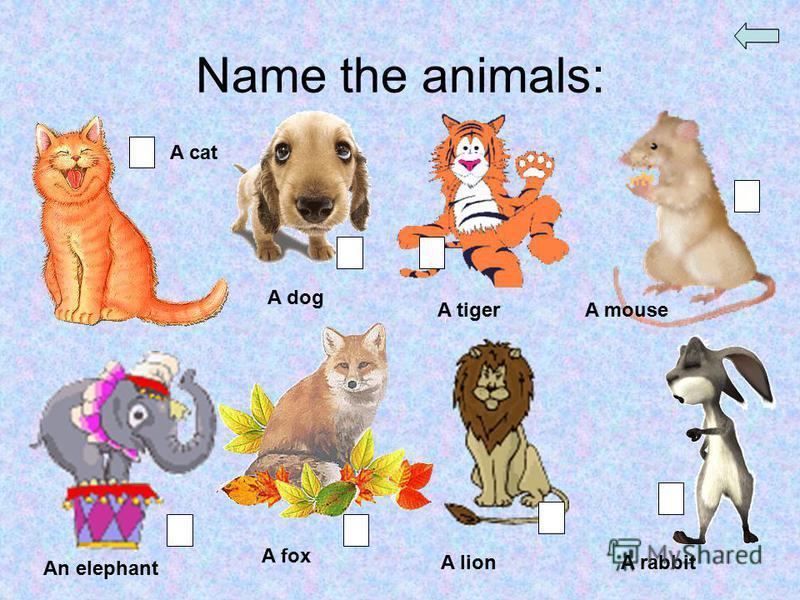 Name the animals: A cat A dog A tigerA mouse An elephant A fox A lionA rabbit