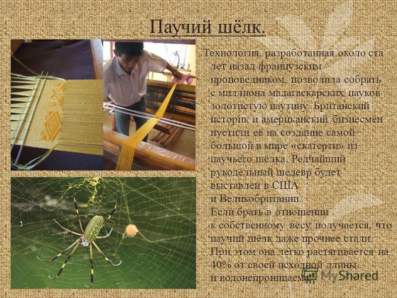 Паучий шёлк. Технология, разработанная около ста лет назад французским проповедником, позволила собрать с миллиона мадагаскарских пауков золотистую паутину. Британский историк и американский бизнесмен пустили её на создание самой большой в мире «скат