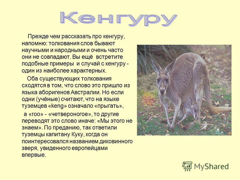 Прежде чем рассказать про кенгуру, напомню: толкования слов бывают научными и народными и очень часто они не совпадают. Вы ещё встретите подобные примеры и случай с кенгуру - один из наиболее характерных. Оба существующих толкования сходятся в том, ч