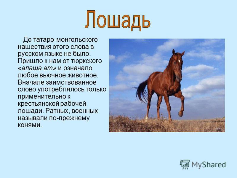 До татаро-монгольского нашествия этого слова в русском языке не было. Пришло к нам от тюркского «алеша ат» и означало любое вьючное животное. Вначале заимствованное слово употреблялось только применительно к крестьянской рабочей лошади. Ратных, военн