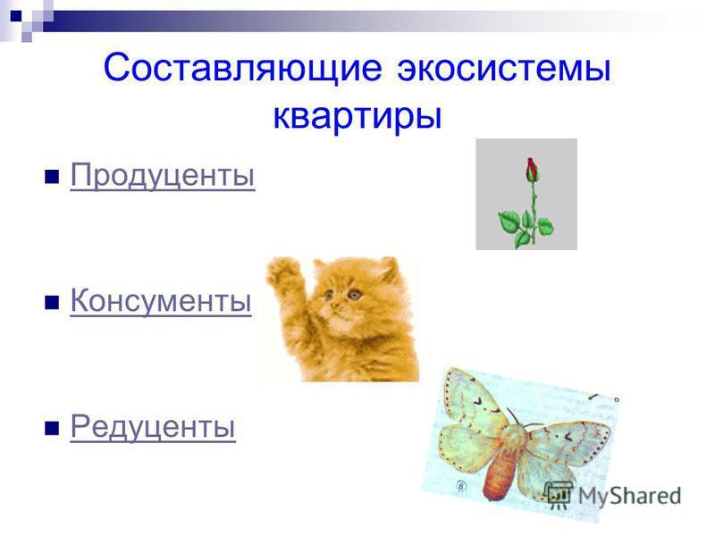 Составляющие экосистемы квартиры Продуценты Консументы Редуценты