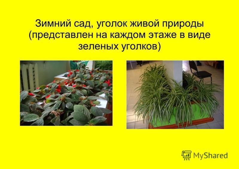 Зимний сад, уголок живой природы (представлен на каждом этаже в виде зеленых уголков)