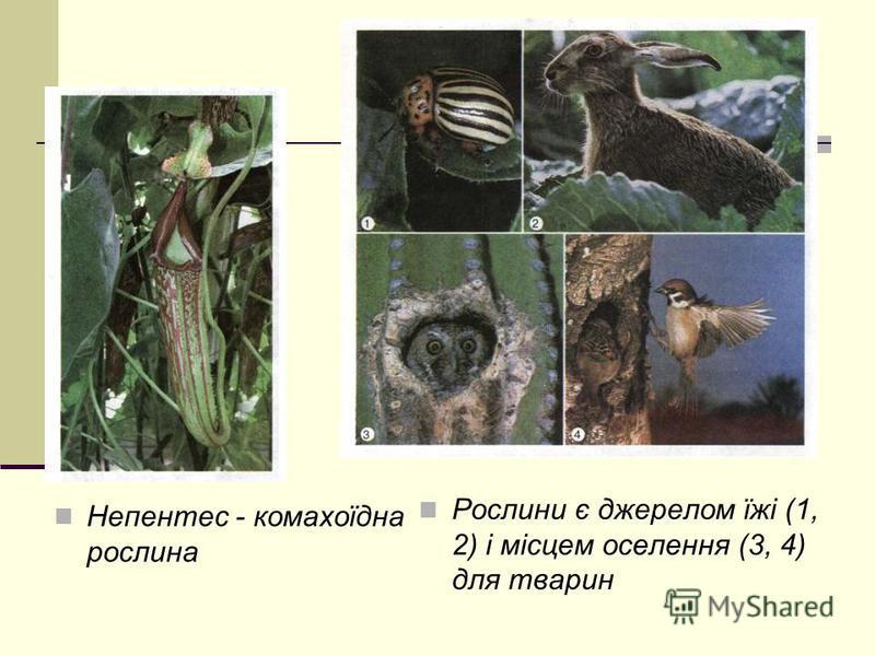 Непентес - комахоїдна рослина Рослини є джерелом їжі (1, 2) і місцем оселення (3, 4) для тварин
