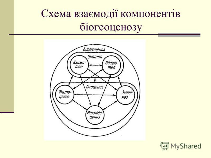 Схема взаємодії компонентів біогеоценозу