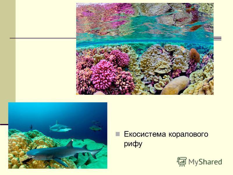 Екосистема коралового рифу