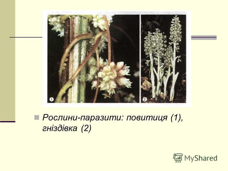 Рослини-паразити: повитиця (1), гніздівка (2)