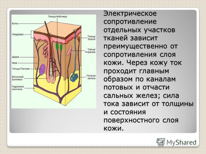 Электрическое сопротивление отдельных участков тканей зависит преимущественно от сопротивления слоя кожи. Через кожу ток проходит главным образом по каналам потовых и отчасти сальных желез; сила тока зависит от толщины и состояния поверхностного слоя