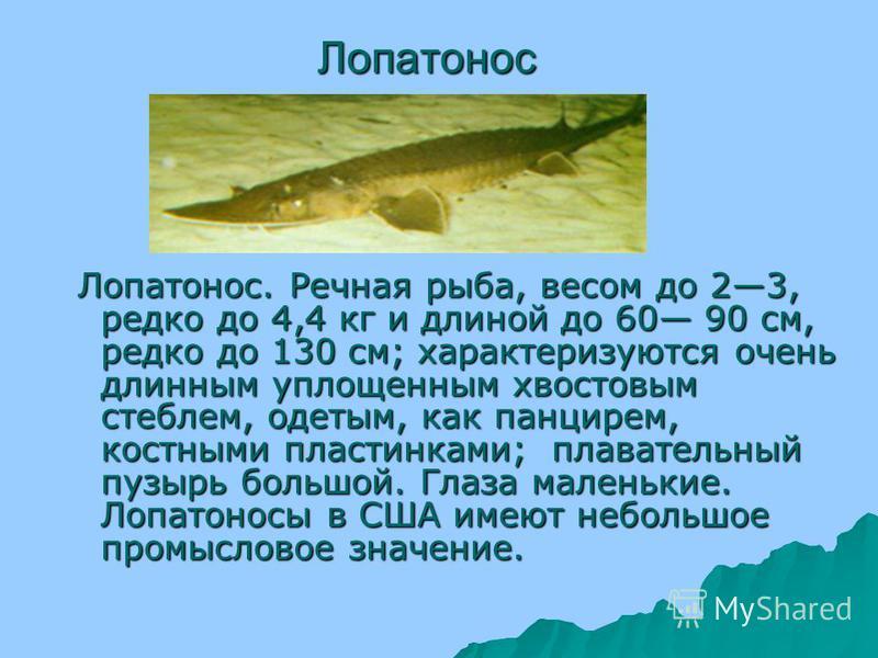 Есть и такие рыбы