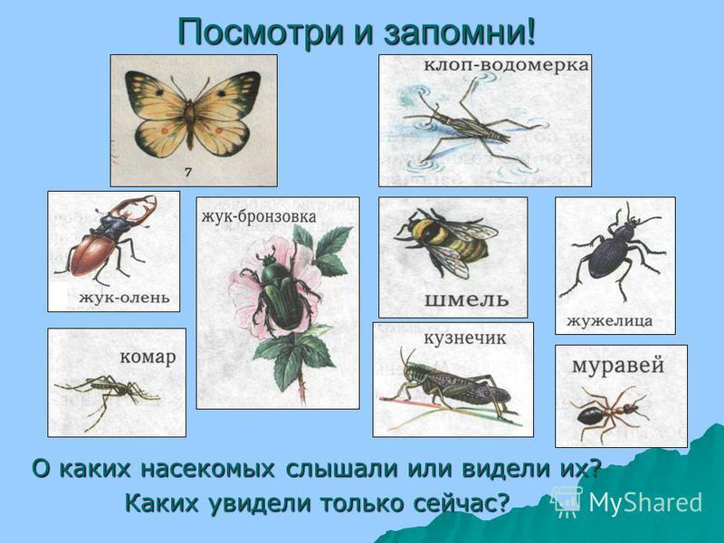 Похожи ли пчела и стрекоза? Чем они похожи и чем отличаются? Пчела и стрекоза – Пчела и стрекоза – насекомые. У всех насекомых есть голова, грудь, брюшко и 6 ног. Каких насекомых вы знаете ещё? Рассмотрите строение пчелы.