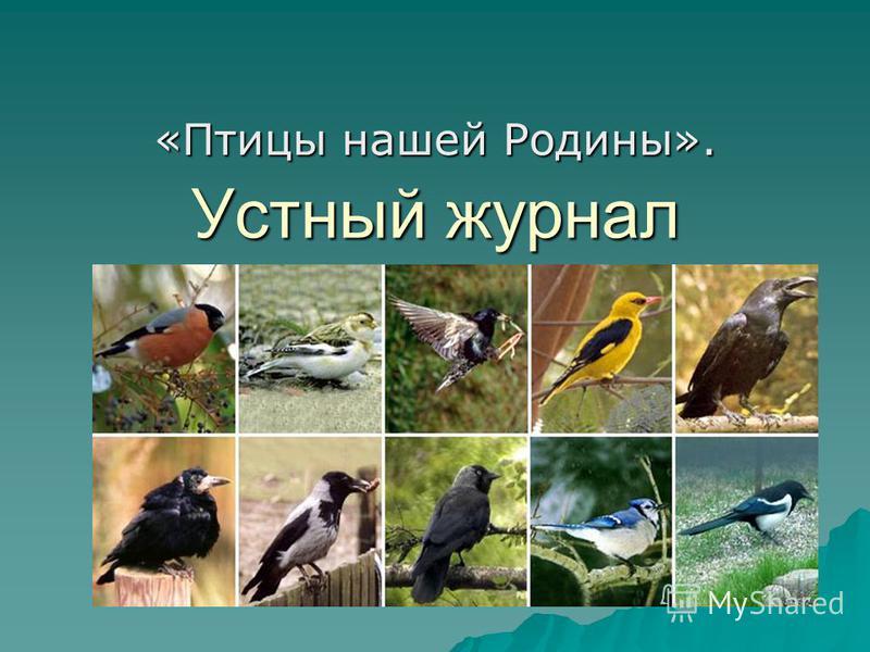 Устный журнал «Птицы нашей Родины».