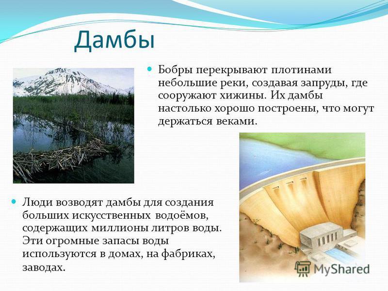 Дамбы Бобры перекрывают плотинами небольшие реки, создавая запруды, где сооружают хижины. Их дамбы настолько хорошо построены, что могут держаться веками. Люди возводят дамбы для создания больших искусственных водоёмов, содержащих миллионы литров вод