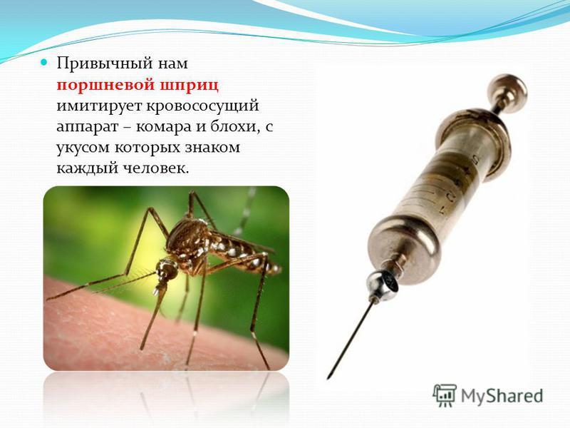 Привычный нам поршневой шприц имитирует кровососущий аппарат – комара и блохи, с укусом которых знаком каждый человек.
