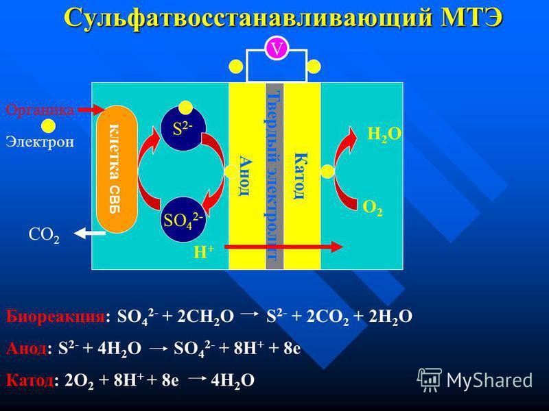 Микробный топливный элемент (МТЭ) Элетрон- транспортная цепь клетки CO 2 M ox M red Анод Твердый электролит Катод V O2O2 H2OH2O H+H+ Органика Электрон МТЭ – миметика биологической системы, в которой бактерии направляют электроны не на их характеристи