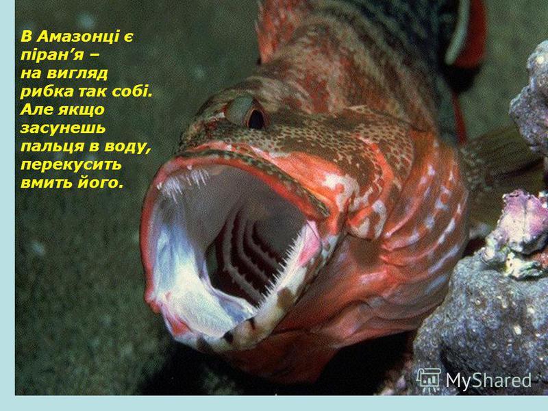В Амазонці є піраня – на вигляд рибка так собі. Але якщо засунешь пальця в воду, перекусить вмить його.
