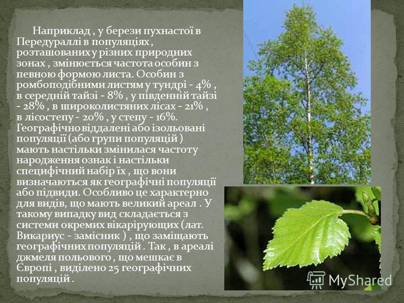 Наприклад, у берези пухнастої в Передураллі в популяціях, розташованих у різних природних зонах, змінюється частота особин з певною формою листа. Особин з ромбоподібними листям у тундрі - 4%, в середній тайзі - 8%, у південній тайзі - 28%, в широколи