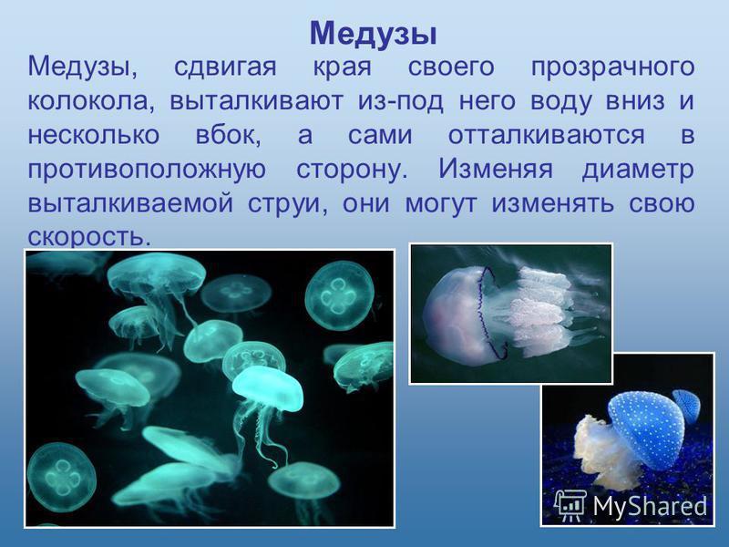 Медузы, сдвигая края своего прозрачного колокола, выталкивают из-под него воду вниз и несколько вбок, а сами отталкиваются в противоположную сторону. Изменяя диаметр выталкиваемой струи, они могут изменять свою скорость. Медузы