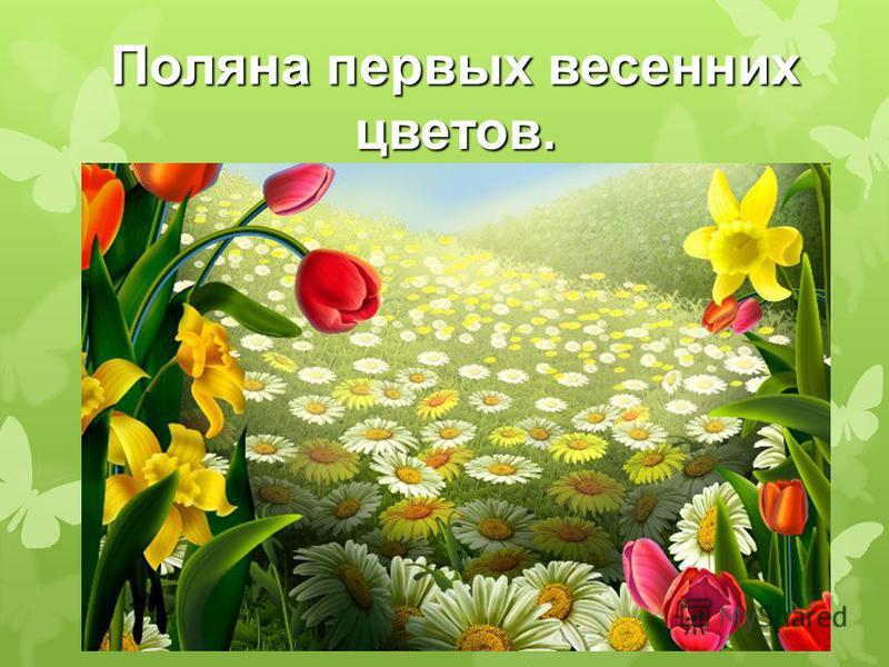 Поляна первых весенних цветов.