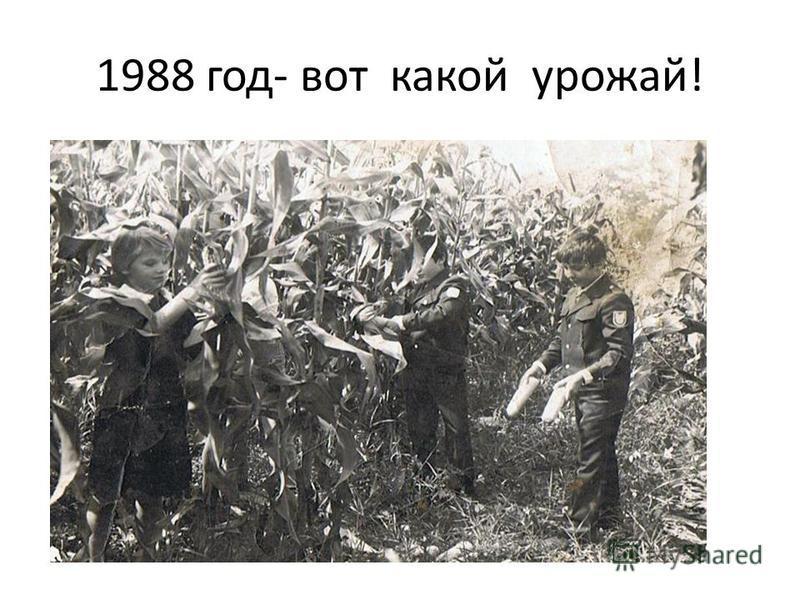1988 год- вот какой урожай!