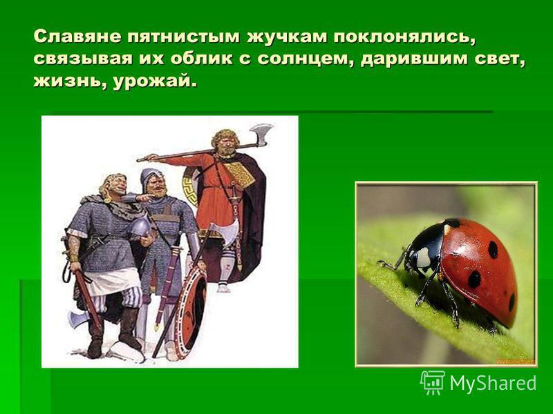 Славяне пятнистым жучкам поклонялись, связывая их облик с солнцем, дарившим свет, жизнь, урожай.