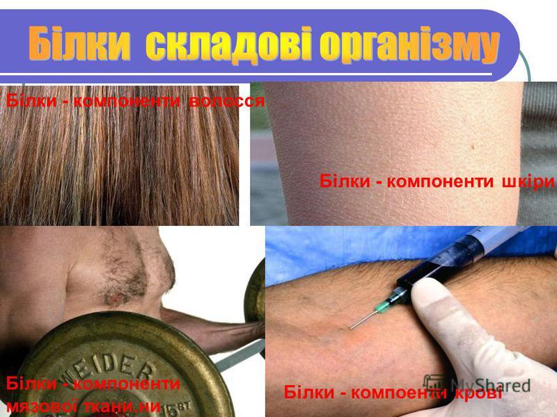 Білки - компоненти волосся Білки - компоненти шкіри Білки - компоненти мязової ткани.ни Білки - компоенти крові