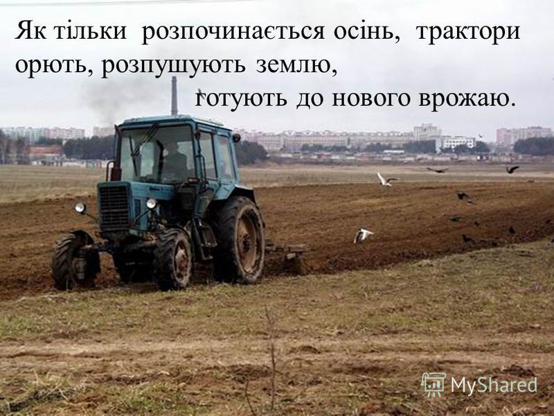 Як тільки розпочинається осінь, трактори орють, розпушують землю, готують до нового врожаю.