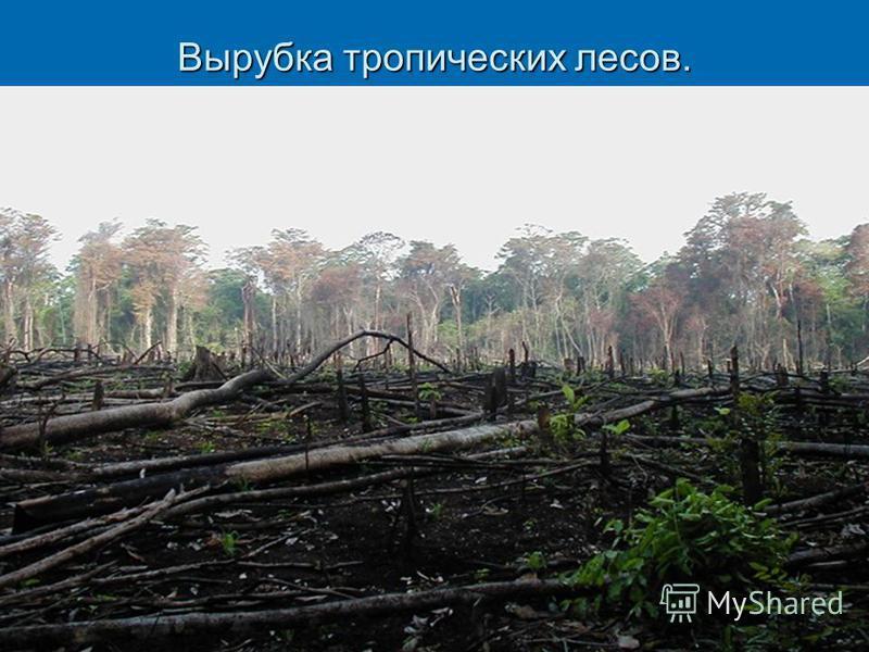 Вырубка тропических лесов.