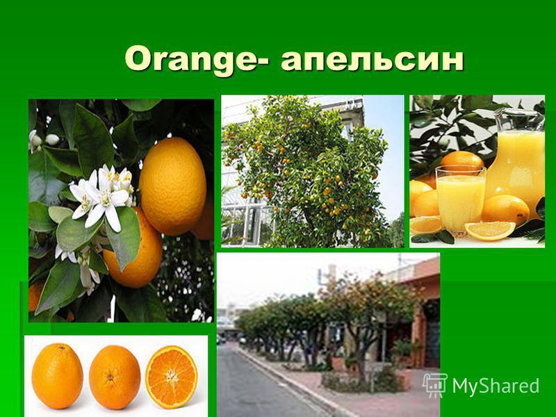 Orange- апельсин Orange- апельсин