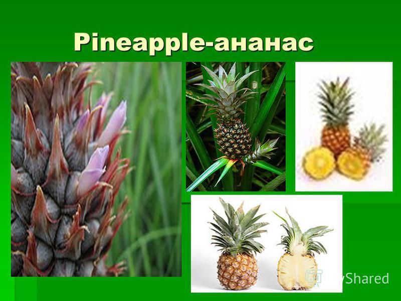 Pineapple-ананас Pineapple-ананас
