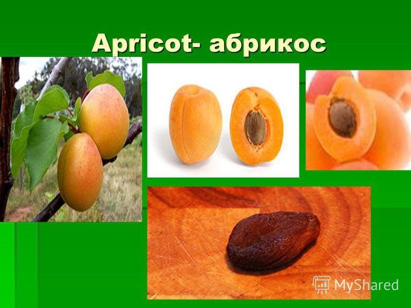 Apricot- абрикос Apricot- абрикос