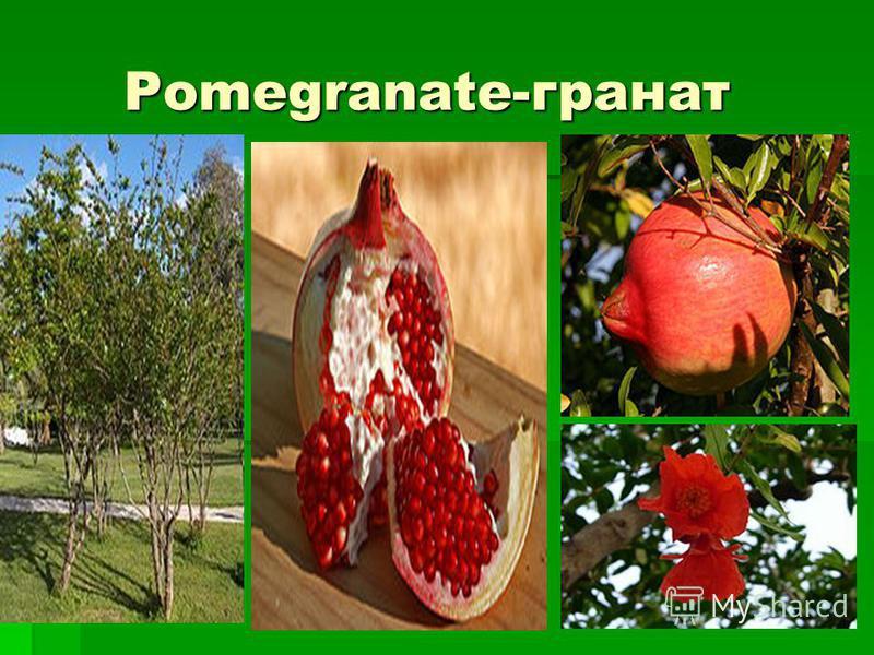 Pomegranate-гранат Pomegranate-гранат