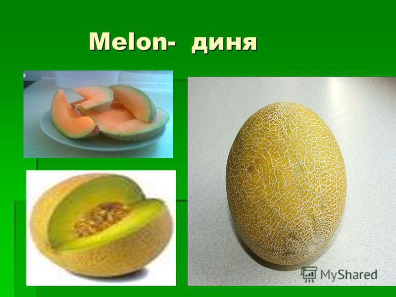 Melon- диня Melon- диня
