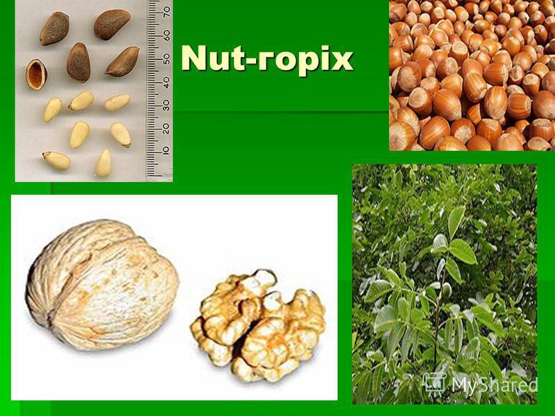 Nut-горіх Nut-горіх