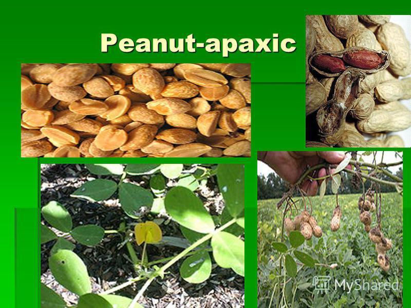 Peanut-арахіс Peanut-арахіс