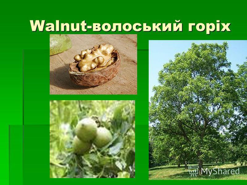 Walnut-волоський горіх Walnut-волоський горіх