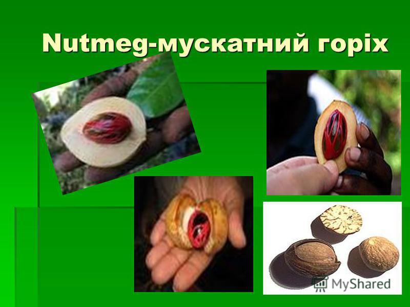 Nutmeg-мускатний горіх Nutmeg-мускатний горіх