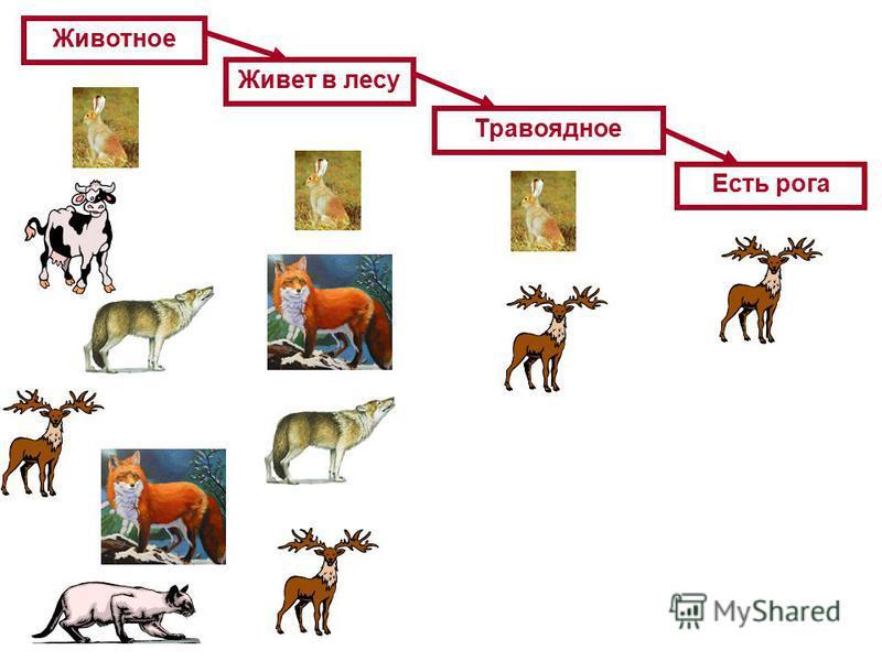 Животное Живет в лесу Травоядное Есть рога