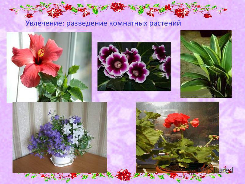 Увлечение: разведение комнатных растений