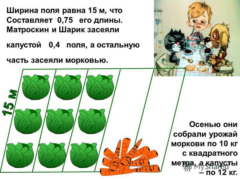 Ширина поля равна 15 м, что Составляет 0,75 его длины. Матроскин и Шарик засеяли капустой 0,4 поля, а остальную часть засеяли морковью. 15 м Осенью они собрали урожай моркови по 10 кг с квадратного метра, а капусты – по 12 кг.