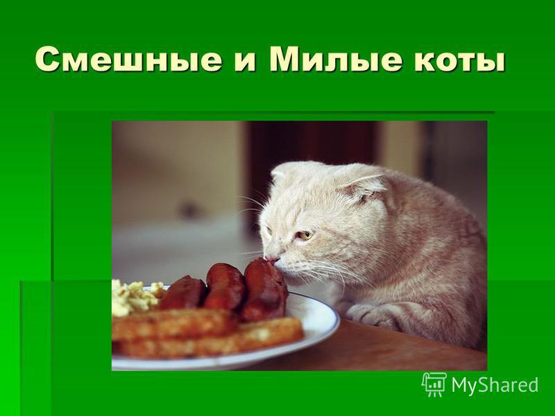 Смешные и Милые коты