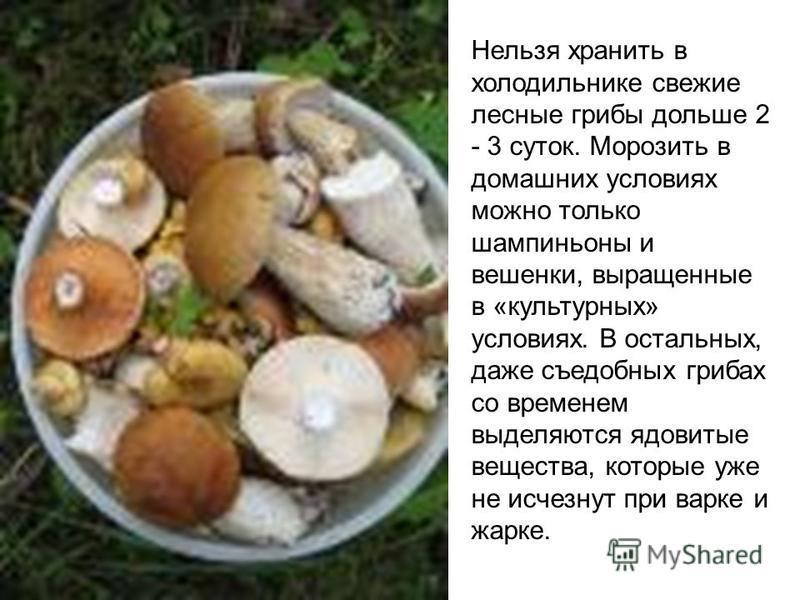 Как хранить белые грибы в домашних условиях 60