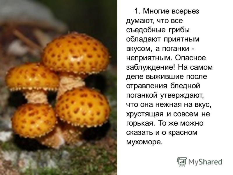 1. Многие всерьез думают, что все съедобные грибы обладают приятным вкусом, а поганки - неприятным. Опасное заблуждение! На самом деле выжившие после отравления бледной поганкой утверждают, что она нежная на вкус, хрустящая и совсем не горькая. То же