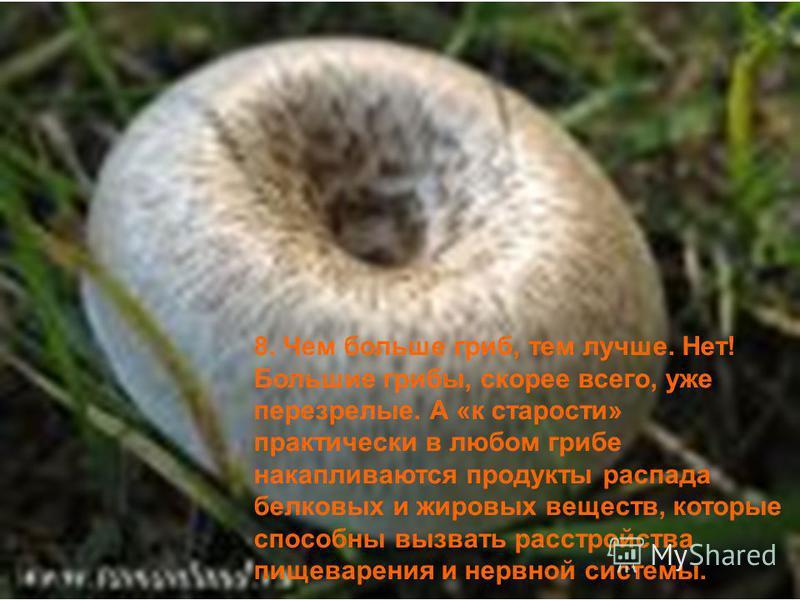 8. Чем больше гриб, тем лучше. Нет! Большие грибы, скорее всего, уже перезрелые. А «к старости» практически в любом грибе накапливаются продукты распада белковых и жировых веществ, которые способны вызвать расстройства пищеварения и нервной системы.
