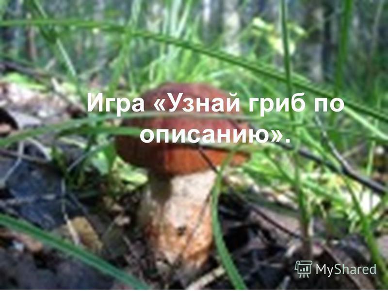 Игра «Узнай гриб по описанию».