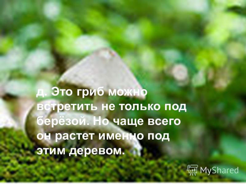 д. Это гриб можно встретить не только под берёзой. Но чаще всего он растет именно под этим деревом.