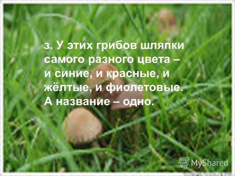 з. У этих грибов шляпки самого разного цвета – и синие, и красные, и жёлтые, и фиолетовые. А название – одно.